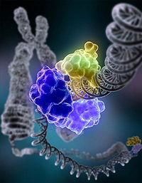 DNA_Repair image molécules
