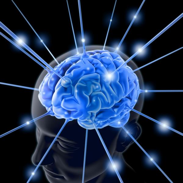 cerveaubleuendorphines