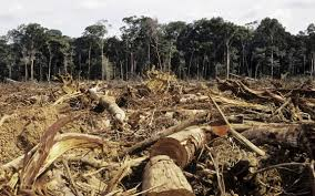 DEFORESTATION PHOTO