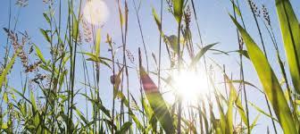 soleil herbes