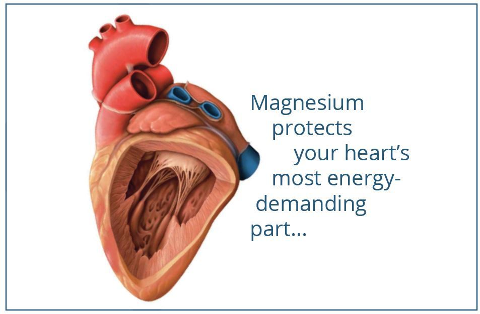Magnesium-protects-the-hearts PHOTO